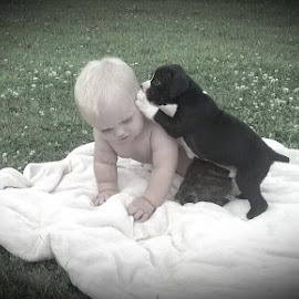 My grandson & our Boxer puppy by Kathy Lawhead - Animals - Dogs Puppies
