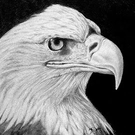 Baldy by Squips Art - Drawing All Drawing ( squips, graphite, black and white, drawing, portrait )
