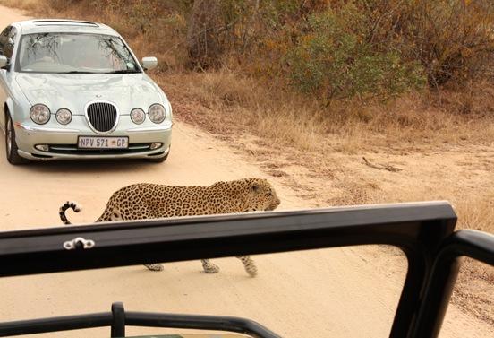 South Africa. Johanesburg, Kruger park, pretoria 142