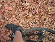 Foot Maple Leaves in Trail