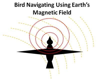 Bird Mag Field