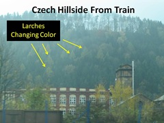 Larches Changing