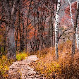 Walk near Garvin Heights by Gary Hanson - Nature Up Close Trees & Bushes ( overlook, fall, garvin heights, winona, walk )