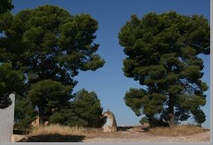 pinos de la madroñera