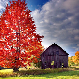 Barn and tree by Larry Bowers - Buildings & Architecture Decaying & Abandoned