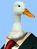 Duckhead