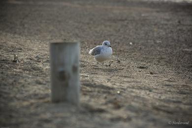 seagull_beach