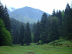 view from Piatra Mare: forest and mountain in summer