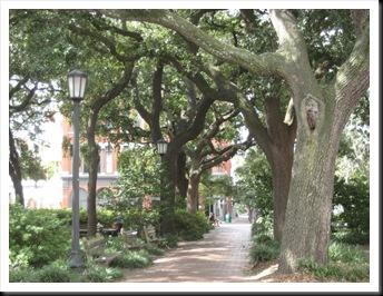 Savannah 2008 074