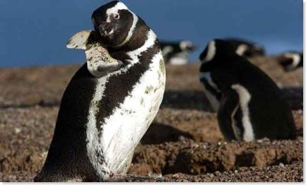 pinguinos5