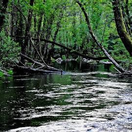 Rio acima ... by Ana Batista Constantino - Landscapes Forests ( floresta, natureza )