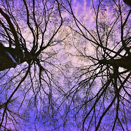 Look up by Bayoue Zantoso - Nature Up Close Trees & Bushes