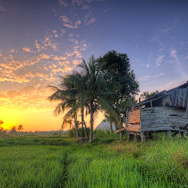Paddy Fields & Old House by Anuar Che Hussin - Landscapes Prairies, Meadows & Fields ( blue sky, trees, sunrise, house, morning, fields )