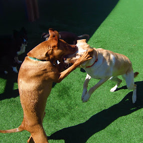 Thats not the ball! by Kaylana Fief - Animals - Dogs Playing ( playing, dogs, #GARYFONGPETS, #SHOWUSYOURPETS )