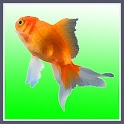 Goldfish Taps icon