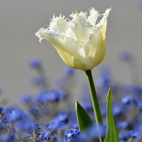 by Nevenka Zajc Medica - Flowers Flower Gardens