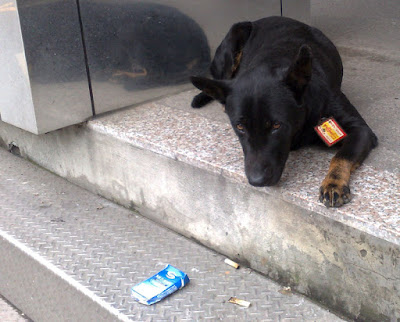 [DOG]戴著護身符的小狗!