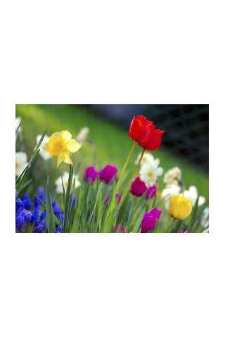 Springtime theme