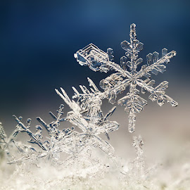 Alone by Ondrej Pakan - Nature Up Close Other Natural Objects ( macro, ice, snow, snowflake,  )