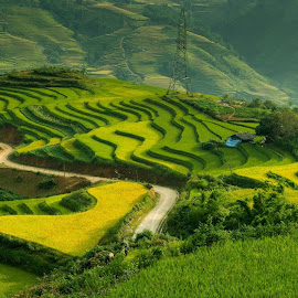 Rice terrace in Autumn by Minh Huyên Nguyễn - Landscapes Mountains & Hills