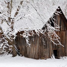 Snowfall on an abandoned barn by Tyrell Heaton - City,  Street & Park  Historic Districts