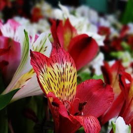 Beautiful display of colors.. by Saumy Nagayach - Novices Only Flowers & Plants ( red, park, flowers, botanical, garden )
