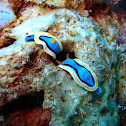 Anna´s chromodoris
