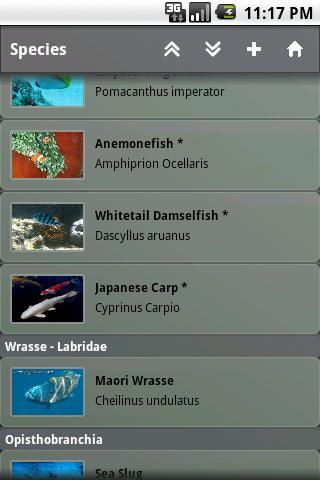 Fishes Key