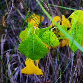 Green leaving changing color. by Brandi Crows Heart - Nature Up Close Leaves & Grasses ( twigs, autumn, green leaves, fall, yellow leaves,  )