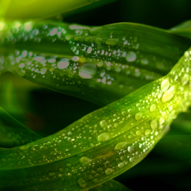 Water Drops by Hayley Goerisch - Nature Up Close Leaves & Grasses ( layered, water drops, nature, leave, color, green, leaves )