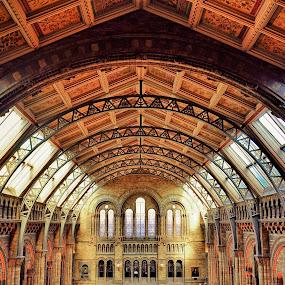 NHM 2 by Gabriel Tocu - Buildings & Architecture Other Interior ( interior, building, , Architecture, Ceilings, Ceiling, Buildings, Building )