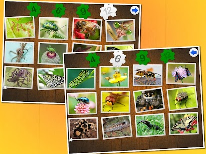 Insects Puzzle - screenshot
