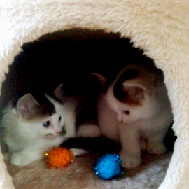 What are we meant to do? by Lyz Amer - Animals - Cats Kittens
