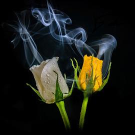 steam 3 by Gregg Pratt - Flowers Flower Arangements