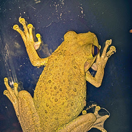 by Alan Burgess - Animals Amphibians
