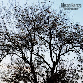 Tree by Ahsan Shakeel - Nature Up Close Gardens & Produce
