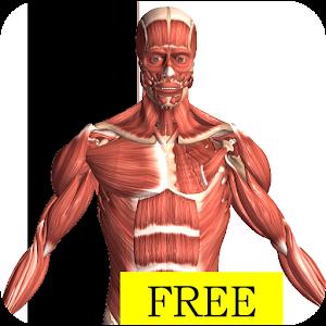 Download Visual Anatomy Free APK