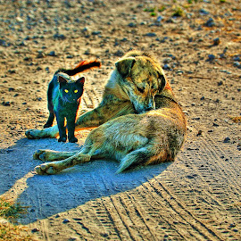 cat and dog by Ayhan Özkur - Animals - Cats Playing