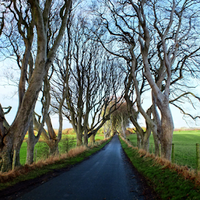 The Dark Hedges by Ludwig Wagner - Landscapes Travel (  )