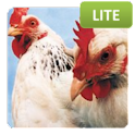 Animal Quiz Lite icon