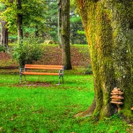 Wooden fungi by Oliver Švob - City,  Street & Park  City Parks ( canon, europe, fungi, karlovac, bench, park, tree, croatia, hrvatska,  )