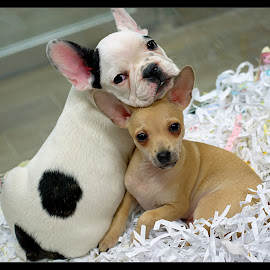 best friends by Gene Van - Animals - Dogs Portraits (  )