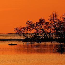 indo sunset by Magdalena Wysoczanska - Landscapes Sunsets & Sunrises ( orange, silhouette, indonesia, sunset, trees )