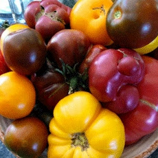 Simple Summer Corn and Heirloom Tomato Salad