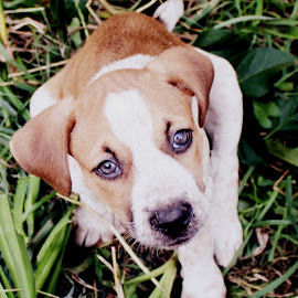 Maylee by Emily Dahl - Animals - Dogs Puppies ( sweet, rescue, puppy, dog, cute )