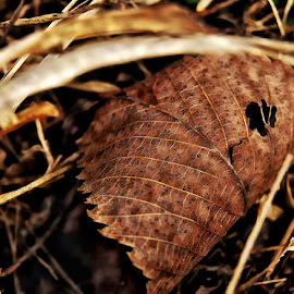 Spotted Brown Leaf by Rhonda Musgrove - Nature Up Close Leaves & Grasses ( spots, autumn, fall, brown, leaf, leaves )