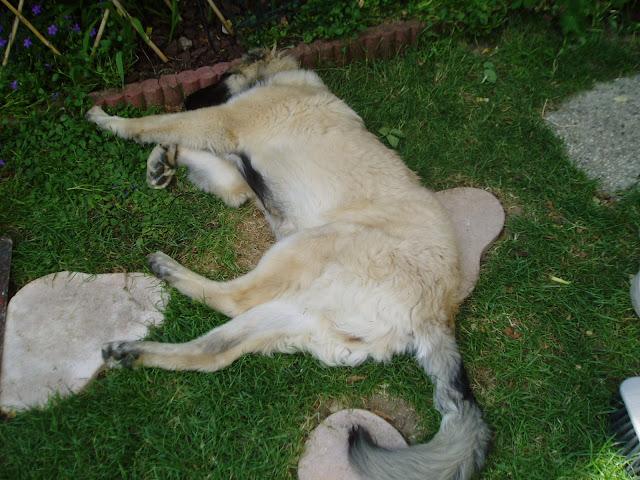 des nouvelles de chaïna dans mes animaux