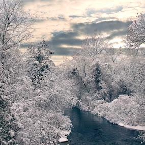 After the snowfall by Leigh Frudiger-Vanderland - Landscapes Forests