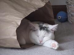 kitty 187