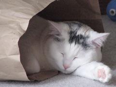 kitty 190
